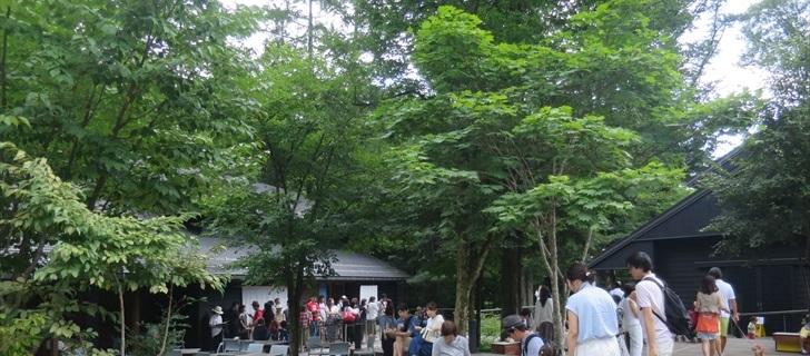 軽井沢星野エリアのハルニレテラスが深い緑の木々に包まれています