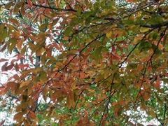 ホテルブレストンコート紅葉