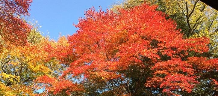 軽井沢のホテル鹿島ノ森の紅葉が見頃です