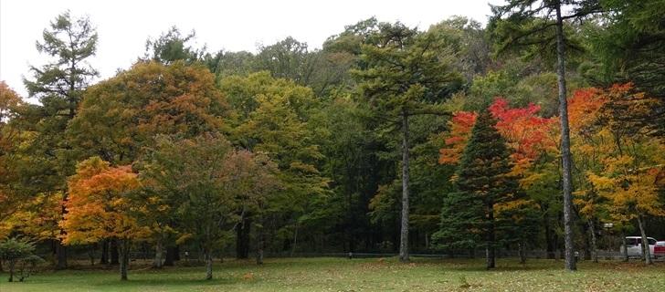 軽井沢 ホテル鹿島ノ森 お庭の木々の紅葉が始まってます