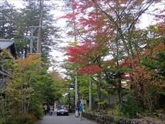 つるや旅館周辺 紅葉