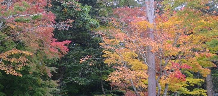軽井沢のつるや旅館周辺の紅葉が始まりました