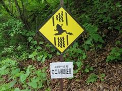 カエル横断注意(3月〜5月)