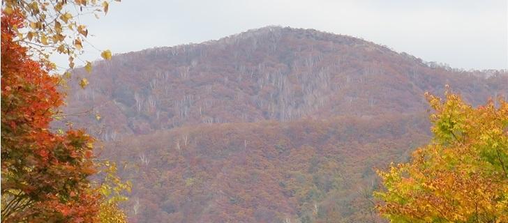 北軽井沢プレジデントリゾートの紅葉が見頃です
