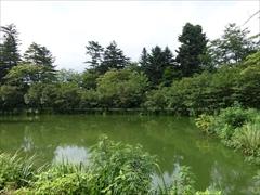 正面池のサトザクラ並木