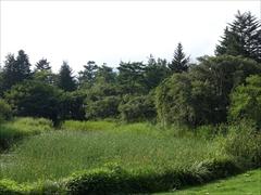 コテージと池と桜の木