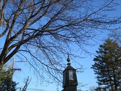 開花前の桜から教会を望む