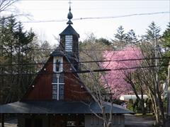 聖パウロカトリック教会 桜