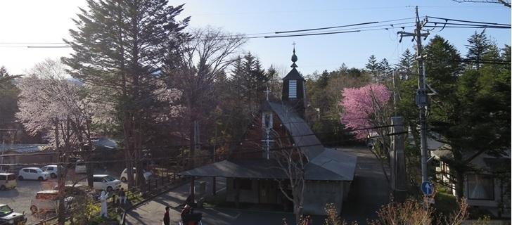 聖パウロカトリック教会の桜が満開です