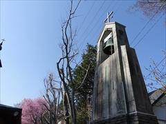 聖パウロカトリック教会 鐘と桜