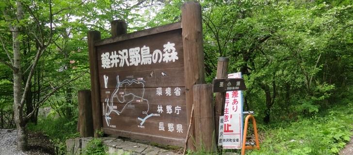 軽井沢野鳥の森が新緑に包まれています