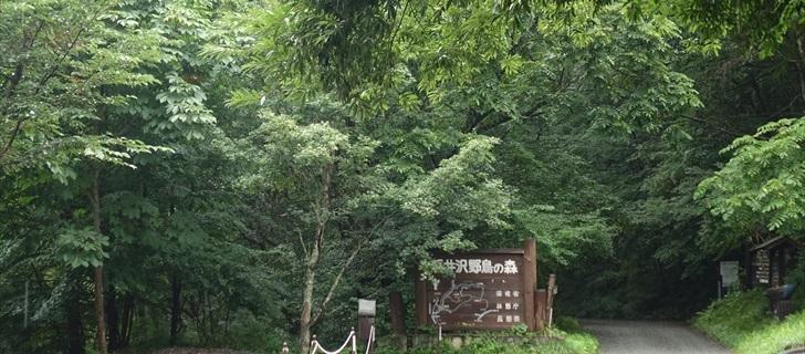 軽井沢の野鳥の森が夏の深い緑に包まれています