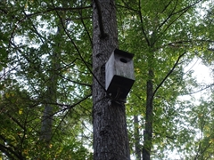 ムササビ巣箱
