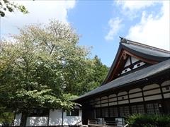 神宮寺本殿左側の山桜