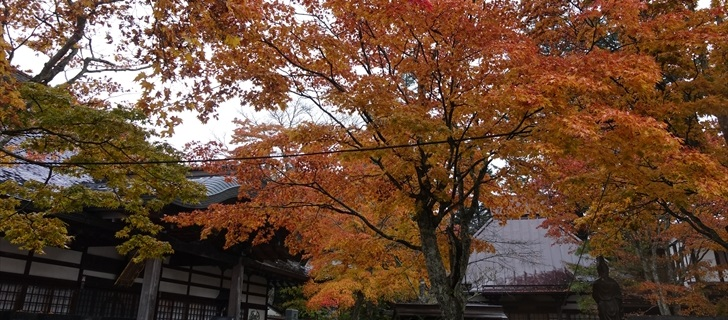 軽井沢 神宮寺の紅葉が最盛期 10月28日雨
