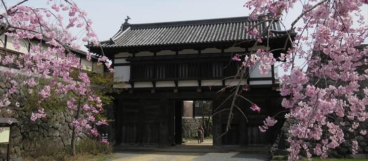 小諸城址の大手門の桜が満開です