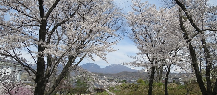 小諸城址 二の丸跡から桜と浅間山を望む