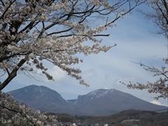小諸城址 二の丸跡 桜と浅間山