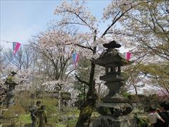 小諸城址 懐古神社 桜