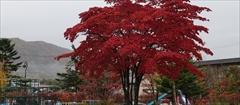 軽井沢 矢ヶ崎公園 10月29日
