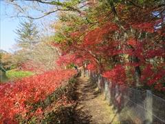 雲場池 遊歩道 紅葉