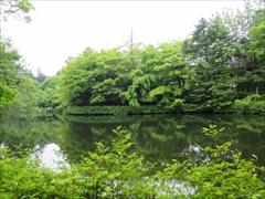 雲場池 新緑