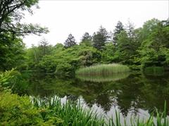 雲場池 水鳥の島 新緑