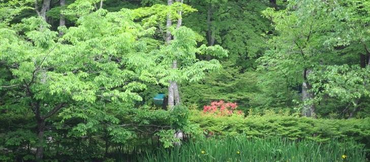 雲場池が新緑に包まれています