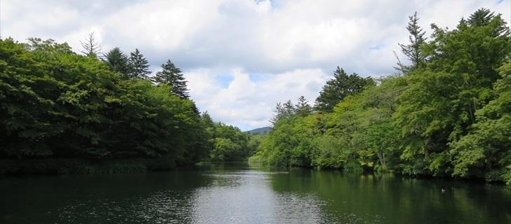 夏の雲場池 緑が深くなっています