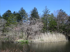 雲場池 水鳥の島
