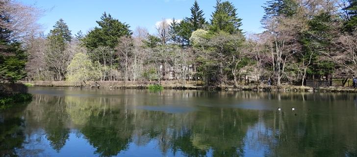 雲場池の木々が芽吹き始めました