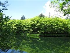 雲場池正面から左側