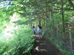 雲場池 遊歩道 若葉 新緑 軽井沢