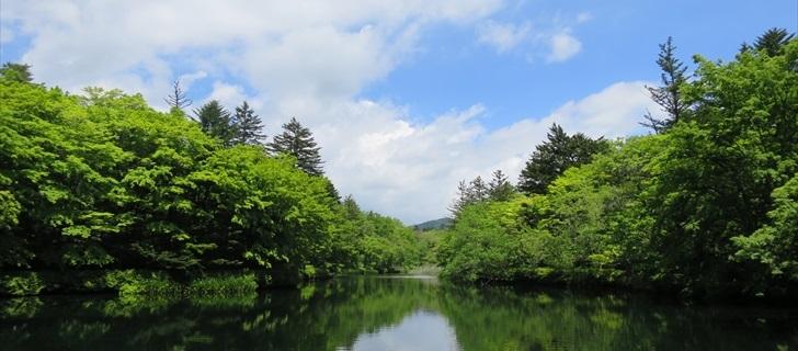 雲場池 若葉 新緑 軽井沢