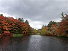 軽井沢 雲場池 雲場池 正面 紅葉