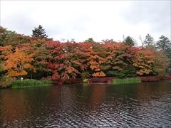 軽井沢 雲場池 雲場池 左側 紅葉