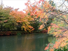 軽井沢 雲場池 雲場池 右側 紅葉
