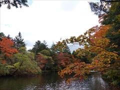 軽井沢 雲場池 雲場池 一周 紅葉
