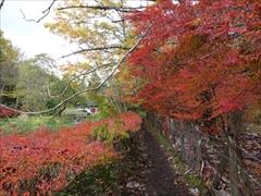 軽井沢 雲場池 雲場池 遊歩道 紅葉