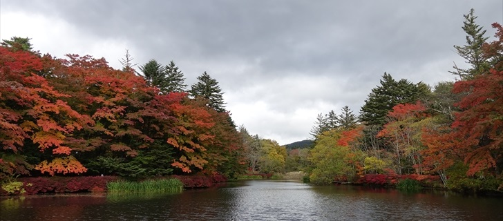 軽井沢 雲場池 軽井沢 雲場池の紅葉が見頃になってきました