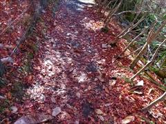 軽井沢 雲場池遊歩道に落ち葉