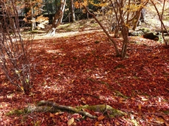 軽井沢 雲場池落ち葉が積もる