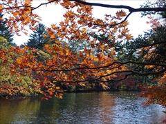 軽井沢 雲場池紅葉 散り始め