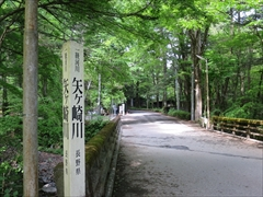 二手橋 若葉 新緑 軽井沢
