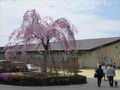 アウトレットセンターモール桜