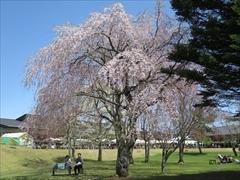 アウトレットツリーモール桜