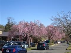 アウトレットニューウエスト桜