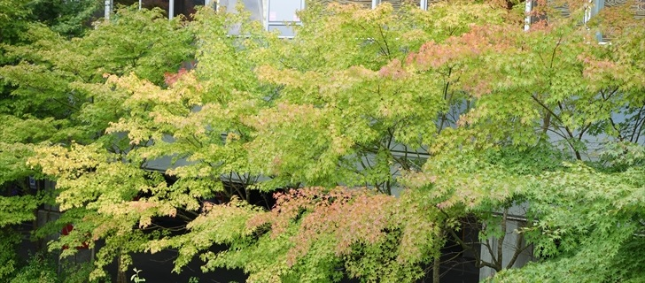 軽井沢 アウトレット 軽井沢 アウトレットのモミジが少し色付き始めました