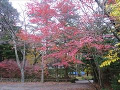 諏訪の森公園 紅葉