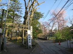 諏訪神社鳥居から桜